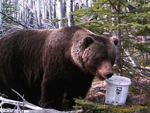 Grizzly trophy fee option